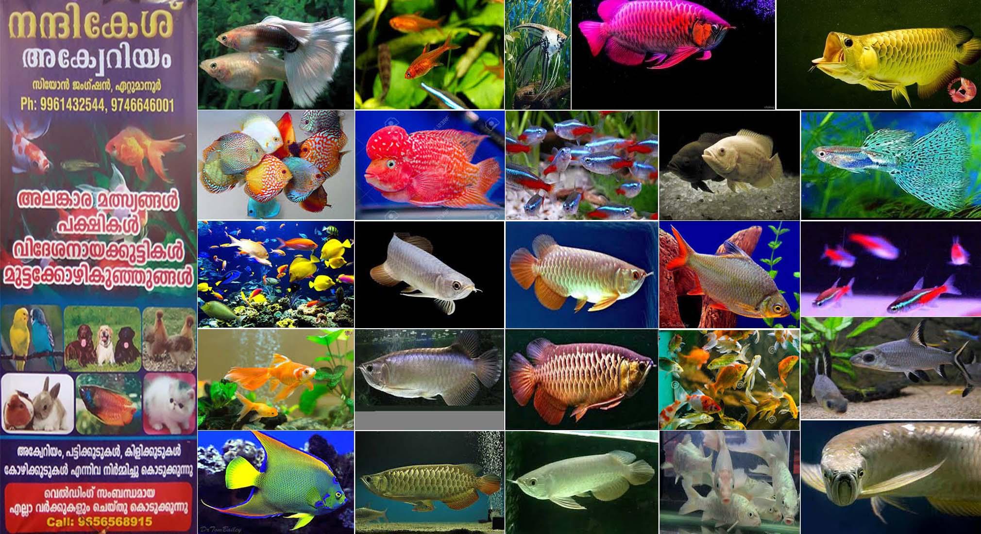 Fish aquarium in chandigarh - Located In