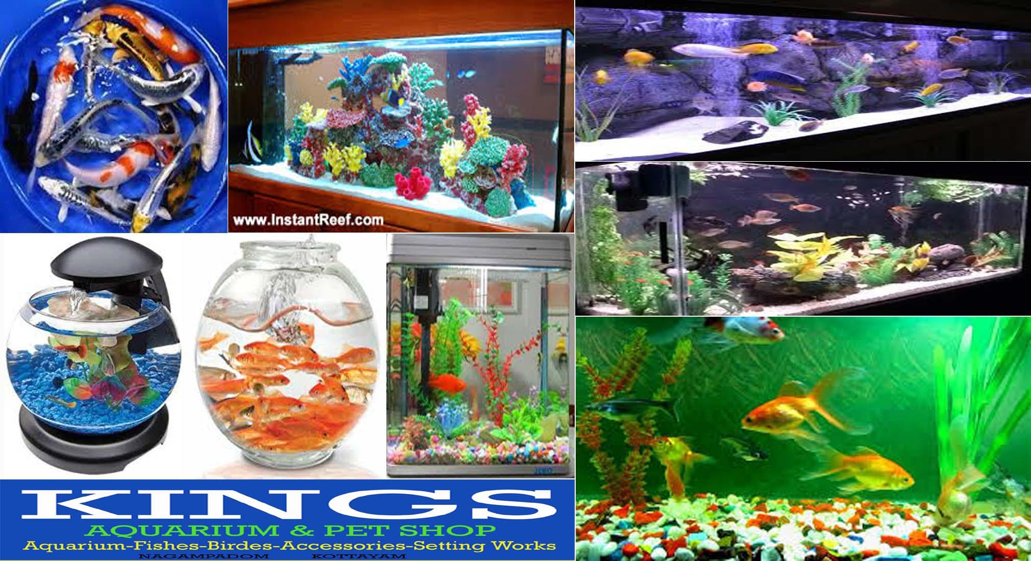 Fish aquarium in gurgaon - Located In