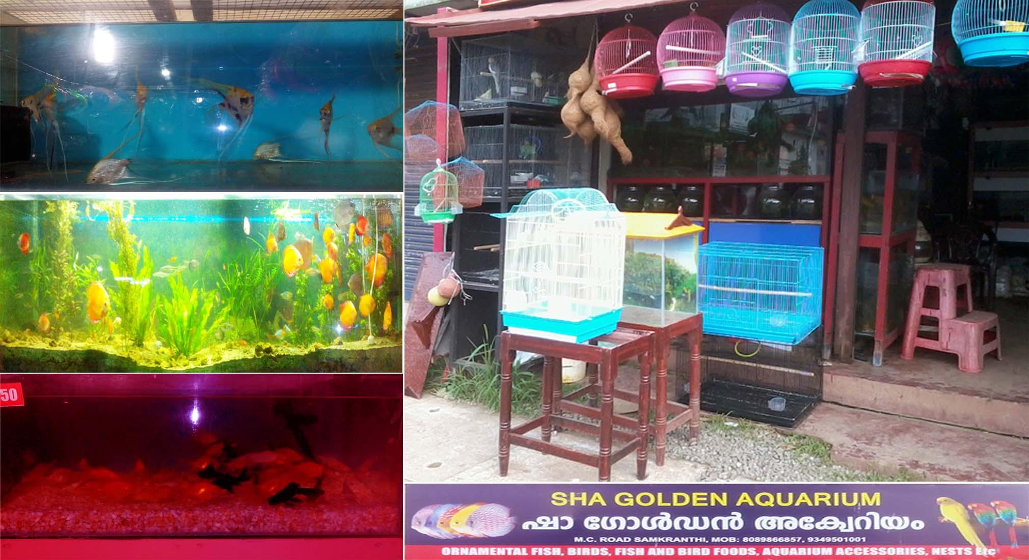 Fish aquarium in gurgaon - Sha Golden Aquarium Fishes And Lovebirds Shop In Kottayam Sankranthi Kerala