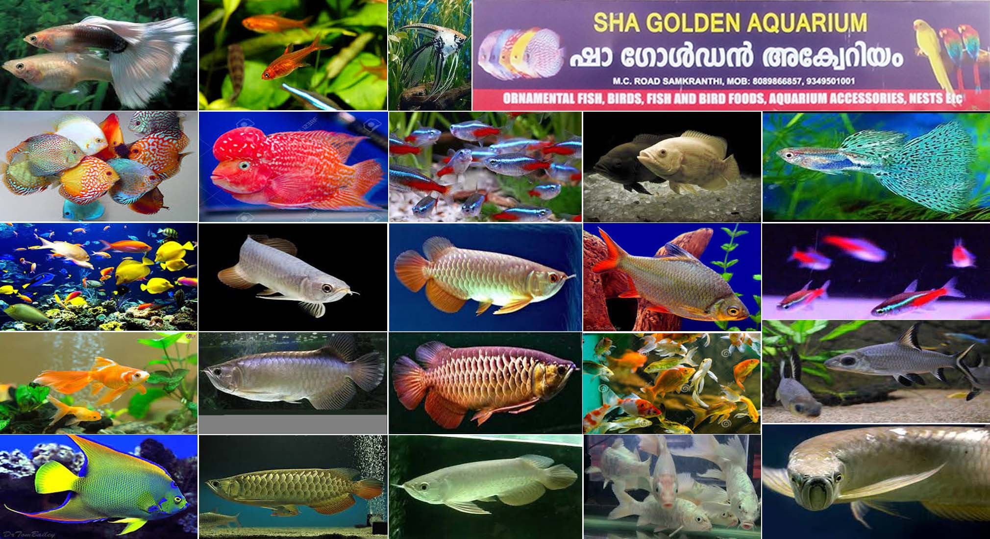 Fish Aquarium In Coimbatore - Located in